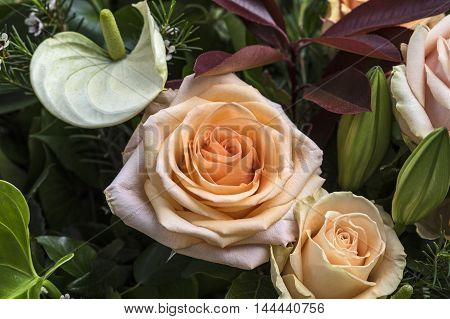 A White Calla and an apricot colored rose