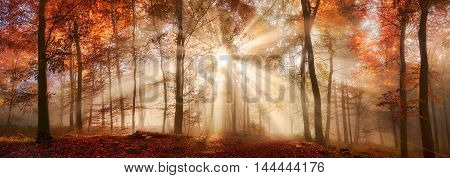 Rays of sunlight in a misty forest in autumn a panorama with magical atmosphere and warm colors