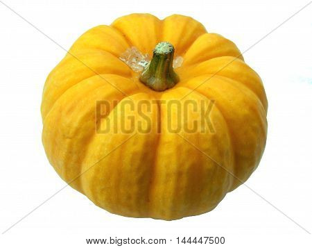 Close up of a Jack be Little mini pumpkin