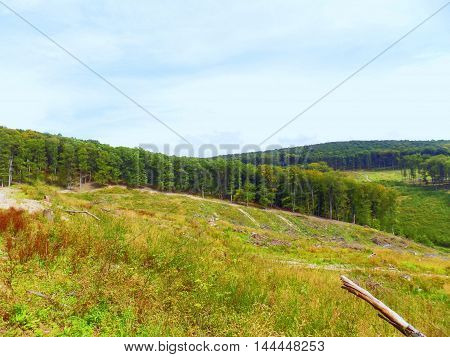 Deciduous forest landscape during sunny day in wild nature