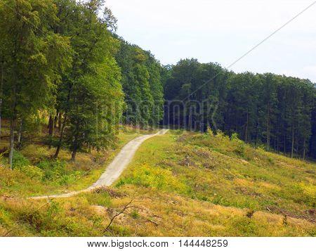 Asphalt road in deciduous forest in wild nature