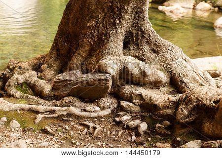 Tree Roots - Meiringspoort Waterfall In De Rust