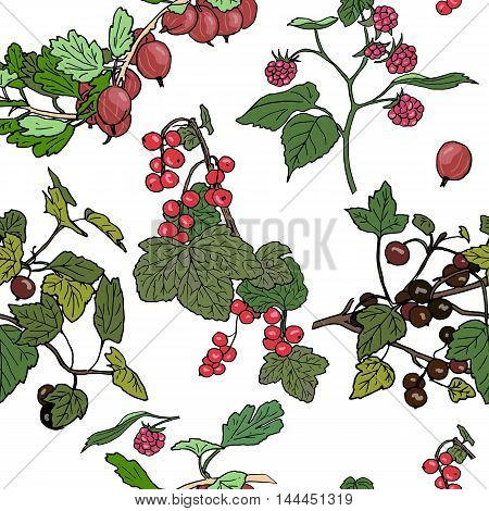 Seamles pattern different berries. red currant black currunt raspberry gooseberry. Hand drawn vector illustration