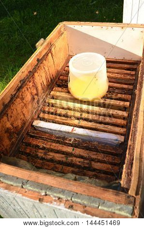 inside of beehive container with sweet syrup for feeding bees before wintertime