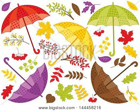 Vector colorful umbrellas with leaves and berries