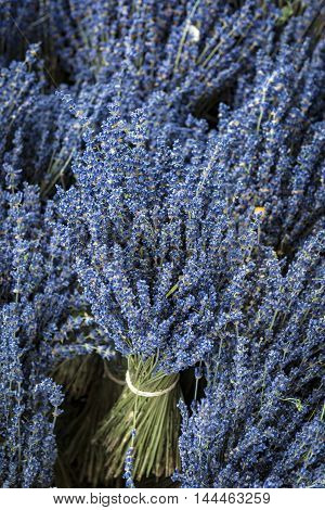 Bunch of lavender flowers in a lavender Store in Provence France