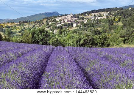 Aurel little village in south of France with a lavender field in front of it