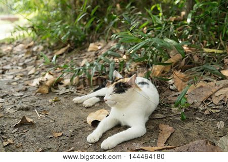 relax cat in the garden sit and sleep