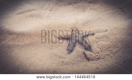 starfish on sand and vintage filter for background