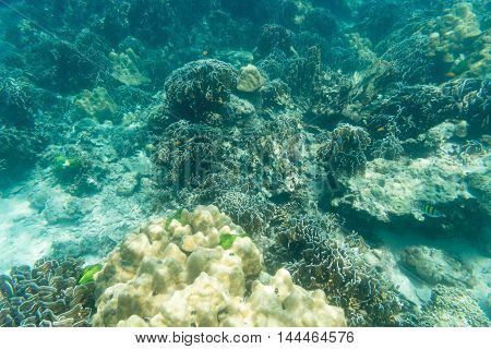 hard coral of environment of underwater sea
