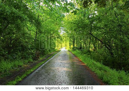 a picture of an exterior Pacific Northwest forest path in spring