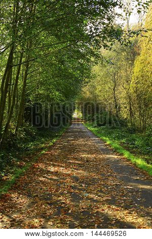 a picture of an exterior Pacific Northwest forest hiking path  in fall