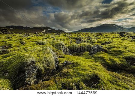 Icelandic moss cover volcanic rocks