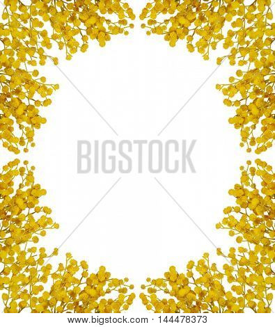 gold mimosa frame isolated on white background