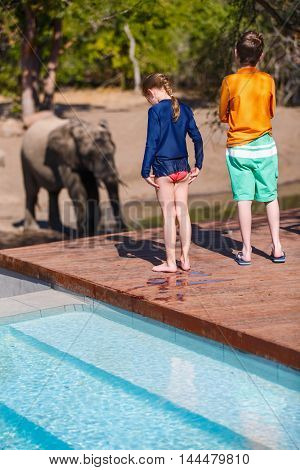 Kids on African safari vacation enjoying wildlife viewing standing near swimming pool