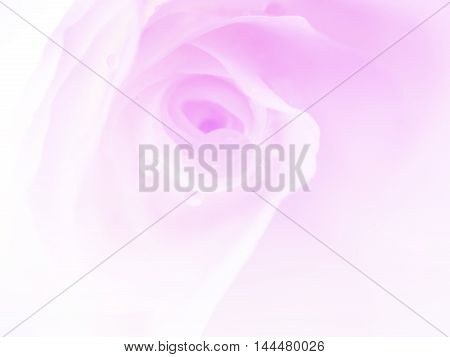 white roses in blur style for background