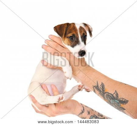 Man hands holding cute dog on white background