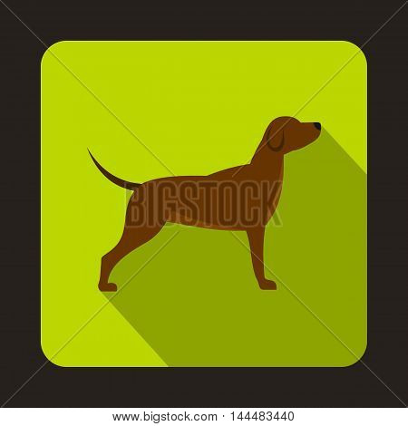 Hunting dog icon in flat style with long shadow