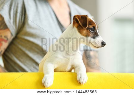 Man with cute dog on yellow couch