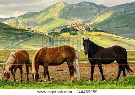 Castelluccio di Norcia (Umbria) horses and landscape