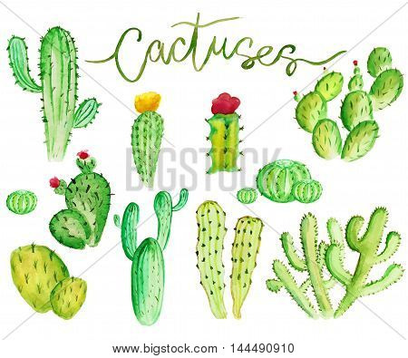 Set of high quality hand painted watercolor cacti elements for your design with cactus Perfect for your projectweddinggreeting cardphotosblogswreathspattern and more
