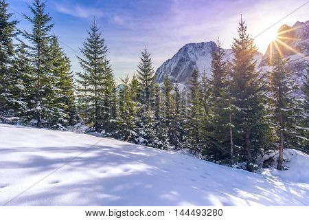 Sun rays over snowy alpine scene - Winter landscape where everything is covered in snow the glades the fir forest and the Austrian Alps peaks but warmed up by a beautiful bright sun.