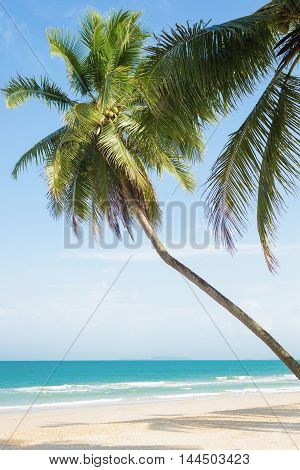 Palm trees with coconut at beautiful tropical beach white sand and blue sky.