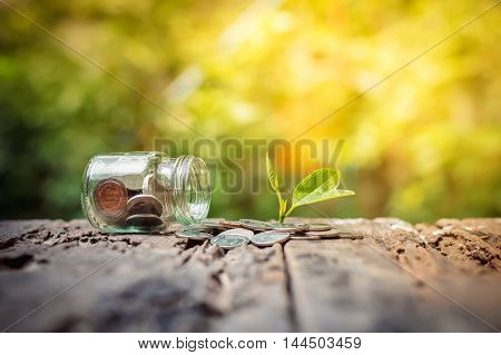 Plant growing in saving coins and money coins in the bottle on wooden background