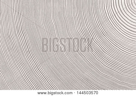 Wooden cut texture abstract or nature background.