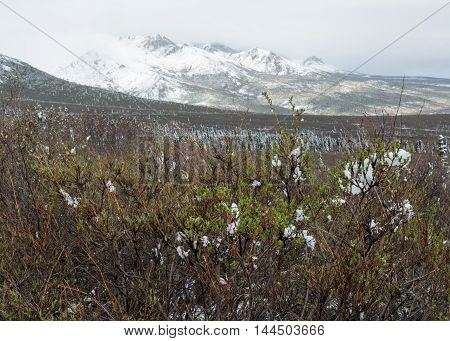Snow dusts the mountains and forests of Denali National Park