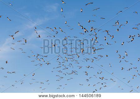 birds storks flying on background blue sky