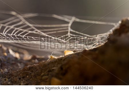of natural abstract background cobweb closeup outdoors