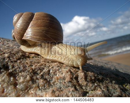 Snail beach animal sea stone summer sky house sun sunburn horns