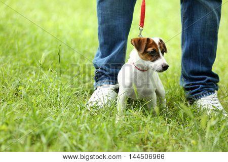 Cute dog in collar on green grass