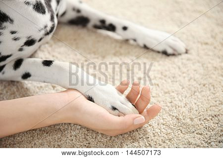 Dalmatian dog's paw in female hand