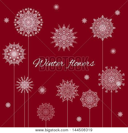 Christmas Banner Winter Flowers On Claret Background