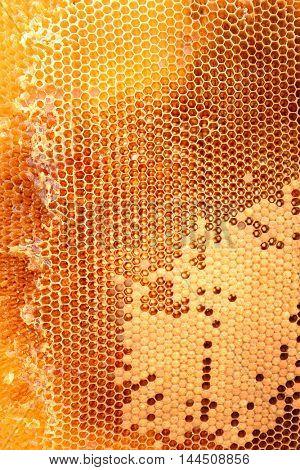 Tasty honey in comb