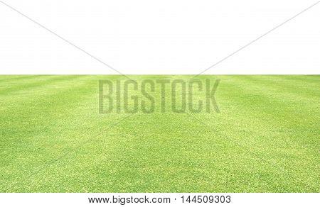 Grass Green Background