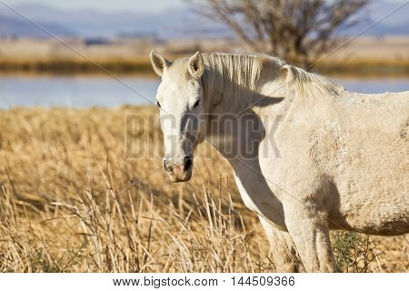 Beautiful white stallion looking left over a wire fence