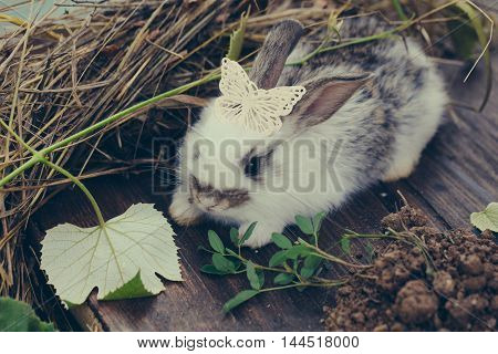 Adorable rabbit pet with soft fur with beautiful butterfly plastic decorative pin on his head and green leaf of grape on hay and wooden background