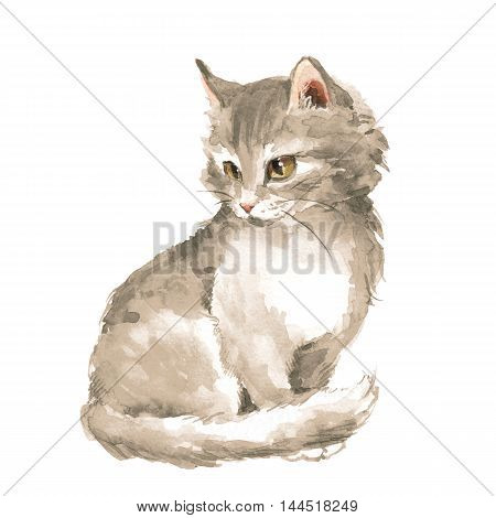Gray fluffy kitten. Watercolor painting