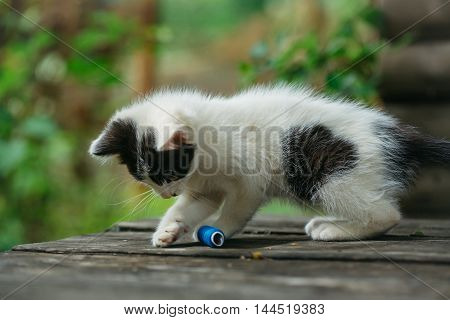 Cute Small Kitten Playing With Thread
