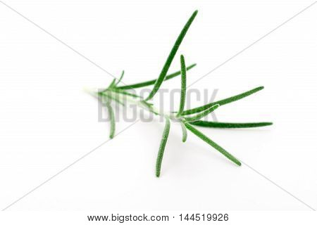 Little branch or fresh rosemary isolated over white background