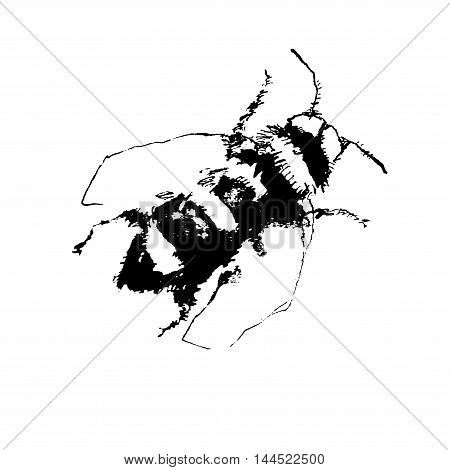vector illustration depicting a bee hand drawn effect. black-and- white line