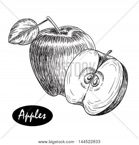 hand drawn apple. Vintage sketch style illustration. Organic eco food. Whole , sliced pieces half, leaves leave sketch. Fruit engraved style illustration.