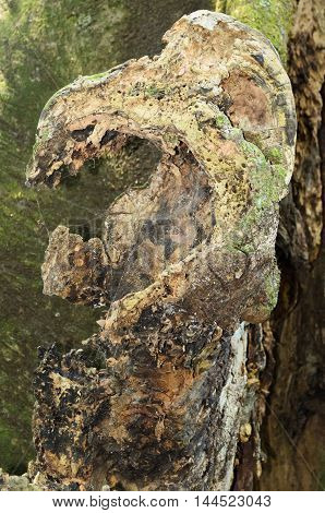bark detail of a tree in the form of dinosaur head