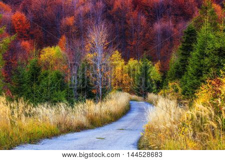 Colorful autumnal trees in the Beskidy Mountains in Poland.
