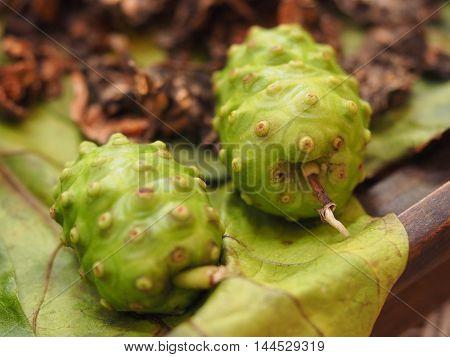 Thai Herbs Of Great Morinda, Indian Mulberry, Beach Mulberry, Noni, Morinda, Citrifolia, Tahitian Noni, Cheese Fruit