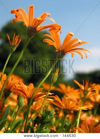 Light Orange Flowers