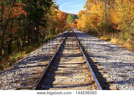 Railroad tracks continuing into autumn colored tree line
